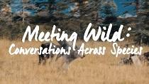 Meeting-Wild